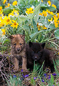 WOV 09 NE0004 01