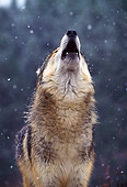 WOV 09 NE0006 01