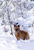 WOV 09 NE0010 01