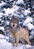 WOV 09 NE0011 01
