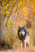 WOV 09 NE0014 01