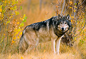WOV 09 NE0015 01