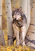 WOV 09 NE0017 01