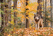 WOV 09 NE0018 01