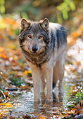 WOV 09 NE0019 01
