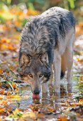 WOV 09 NE0020 01