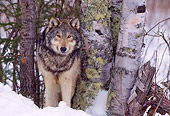 WOV 09 NE0021 01