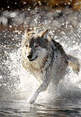 WOV 09 NE0022 01