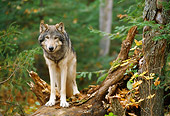 WOV 09 NE0023 01