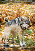 WOV 09 NE0024 01