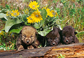 WOV 09 NE0026 01