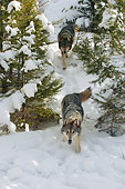 WOV 09 NE0028 01