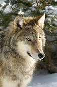 WOV 09 NE0030 01