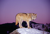 WOV 09 RK0001 10