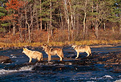 WOV 09 RK0096 03