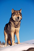 WOV 09 RK0147 04