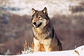 WOV 09 RK0148 07