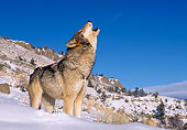 WOV 09 RK0155 09