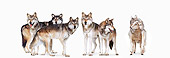 WOV 09 RK0177 01