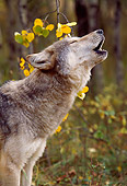 WOV 09 RW0003 01
