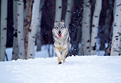 WOV 09 RW0005 01