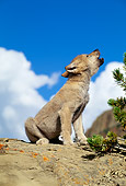 WOV 09 RW0007 01