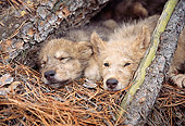 WOV 09 RW0008 01