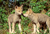 WOV 09 RW0009 01