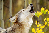 WOV 09 RW0013 01