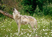 WOV 09 RW0014 01
