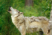 WOV 09 RW0015 01