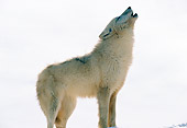 WOV 09 RW0016 01