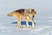 WOV 09 RW0020 01