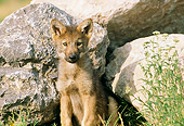 WOV 09 RW0022 01