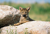 WOV 09 RW0023 01