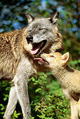 WOV 09 RW0026 01