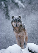 WOV 09 TL0001 01