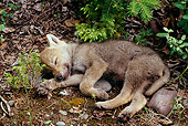 WOV 09 TL0015 01