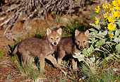 WOV 09 TL0016 01