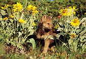 WOV 09 TL0019 01