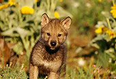 WOV 09 TL0020 01
