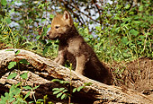 WOV 09 TL0022 01