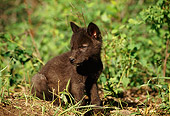 WOV 09 TL0024 01