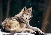 WOV 09 TL0027 01