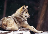 WOV 09 TL0027 02
