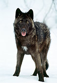 WOV 09 TL0029 01