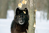 WOV 09 TL0030 01