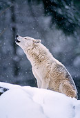WOV 09 TL0032 01