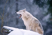 WOV 09 TL0033 01
