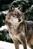 WOV 09 TL0034 01